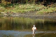 Fly Fishing Taneycomo